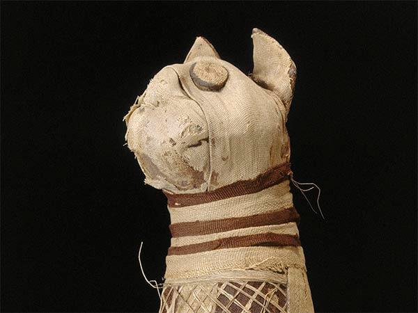 мумия кошки, древний египет