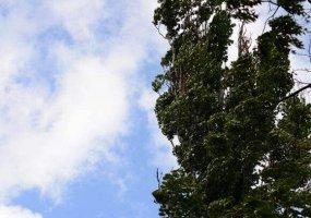 На Кубани 16 и 17 ноября ожидается сильный ветер