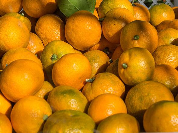 мандарины, врачи, новый год