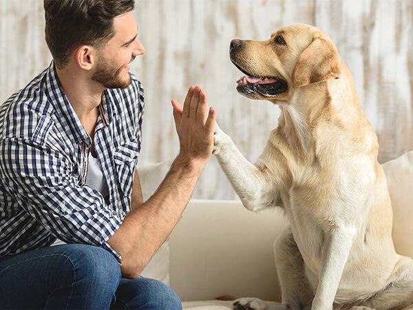 собаки, возраст