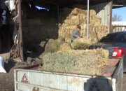 В Кущевской прошла акция по сбору кормов для животных семейного зверинца