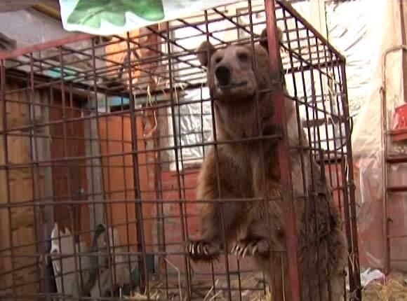 Фермер из Динского района готов приютить медведя Афанасия