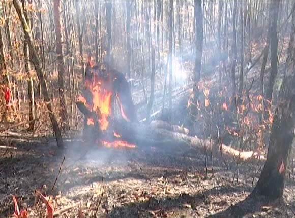 Волна природных пожаров: в Северском районе локализовали огонь на площади 10 га