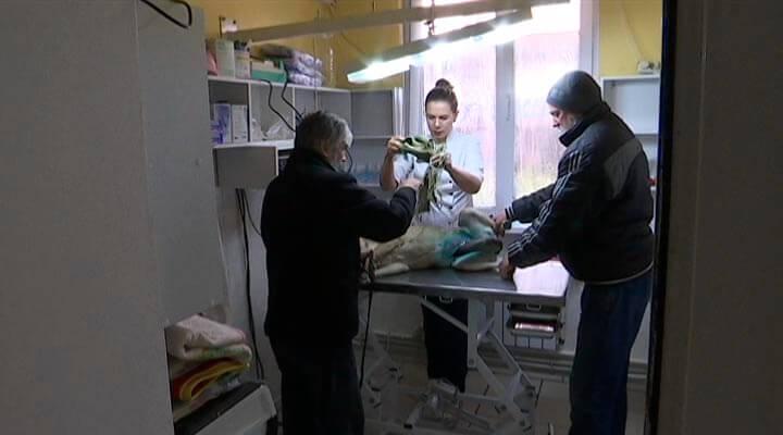В Краснодарском крае 27 ноября ветеринары отметили профессиональный праздник