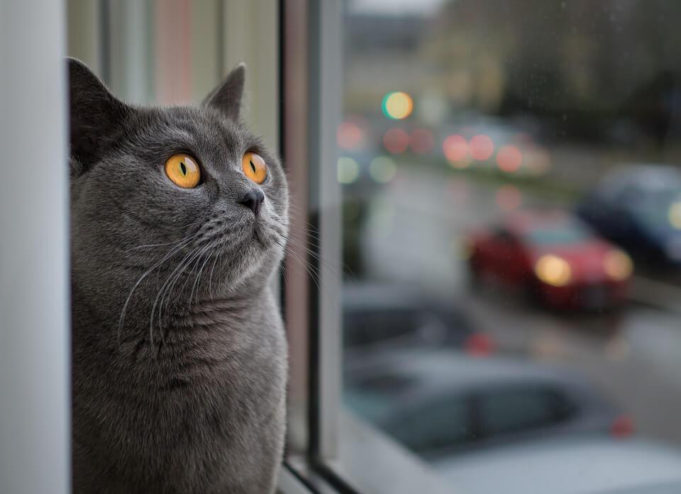 Пять причин, почему ваш кот любит смотреть в окно
