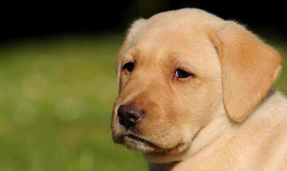 Как стар ваш пес? Новая формула для пересчета возраста собаки в человеческий