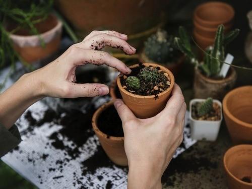 комнатные растения, качество воздуха
