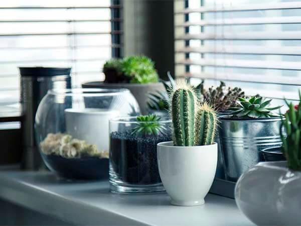 Комнатные растения очищают воздух, но совсем не так, как принято думать