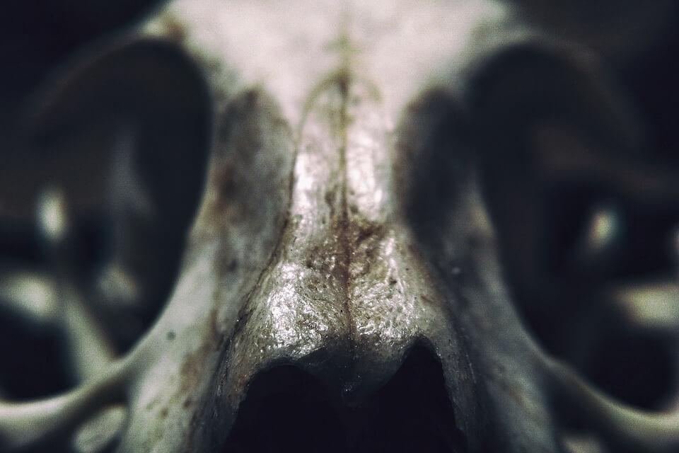 Перепончатые монстры со шпорами: кого реконструировали российские палеонтологи?
