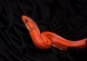 Неведома зверушка: как приручить экзотического питомца
