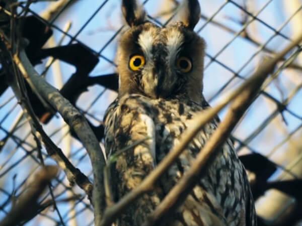 Спасите птицу: на Кубани работает уникальный центр реабилитации пернатых