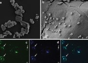 Найдены бактерии, которые могут питаться метеоритами и колонизировать Марс