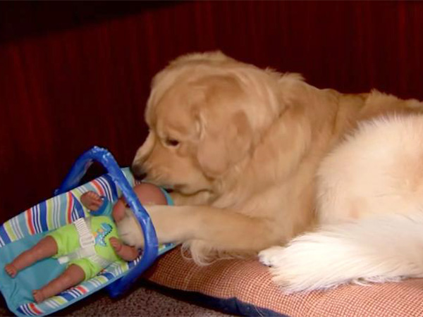 собака, игрушки