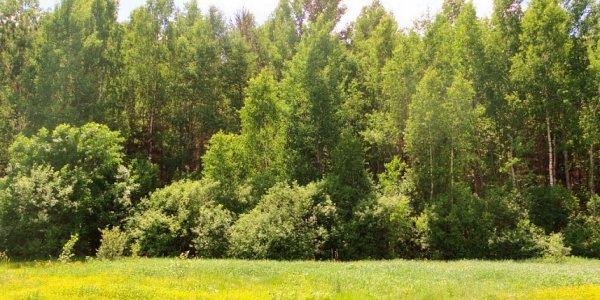 На Кубани до 8 ноября действует запрет на выход в лес
