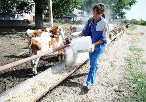 На Кубани 104 млн рублей по гранту «Агростартап» получат 36 фермерских хозяйств