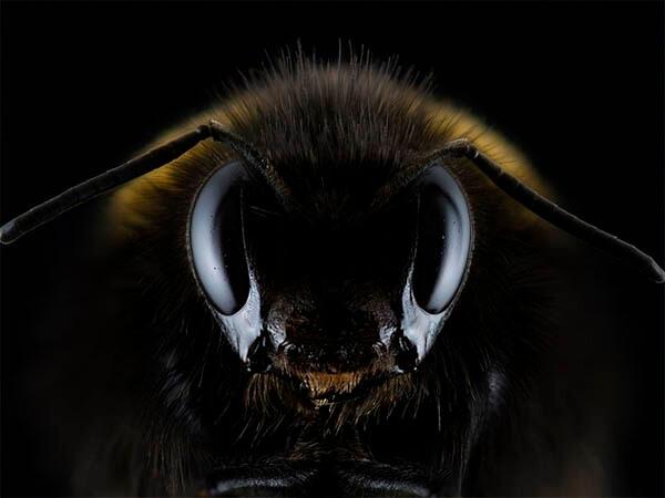 Неправильный мед: электричество делает пчел агрессивными