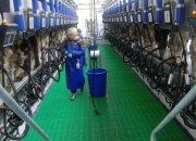 В Новокубанском районе за семь месяцев построили молочный комплекс