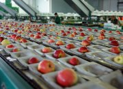 «Постфактум»: готовят сани летом, а фруктохранилище — зимой