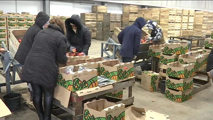 В Горячем Ключе открыли фруктохранилище на 1,5 тыс. тонн яблок