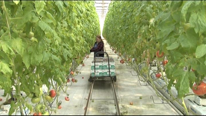 Агропромышленный комплекс Кубани в 2019 году получил более 7,5 млрд рублей