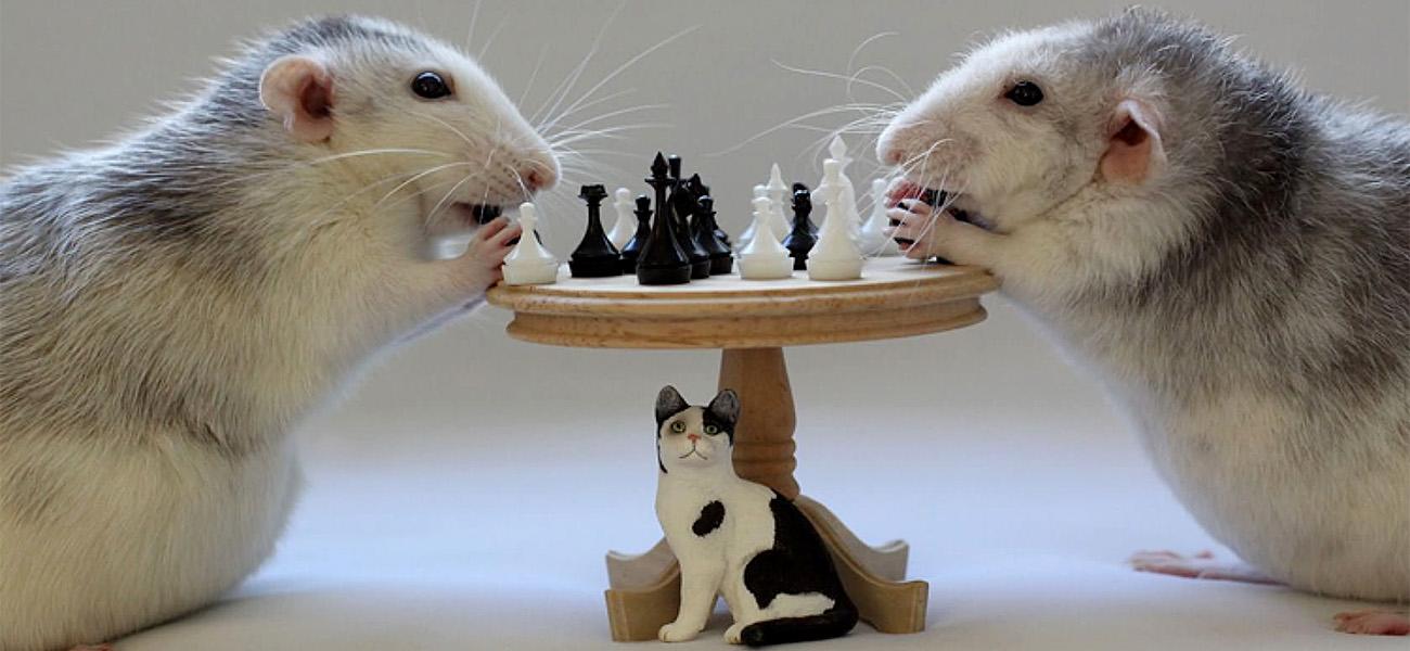 Символ Нового года: 5 фантастических историй о мышах и крысах