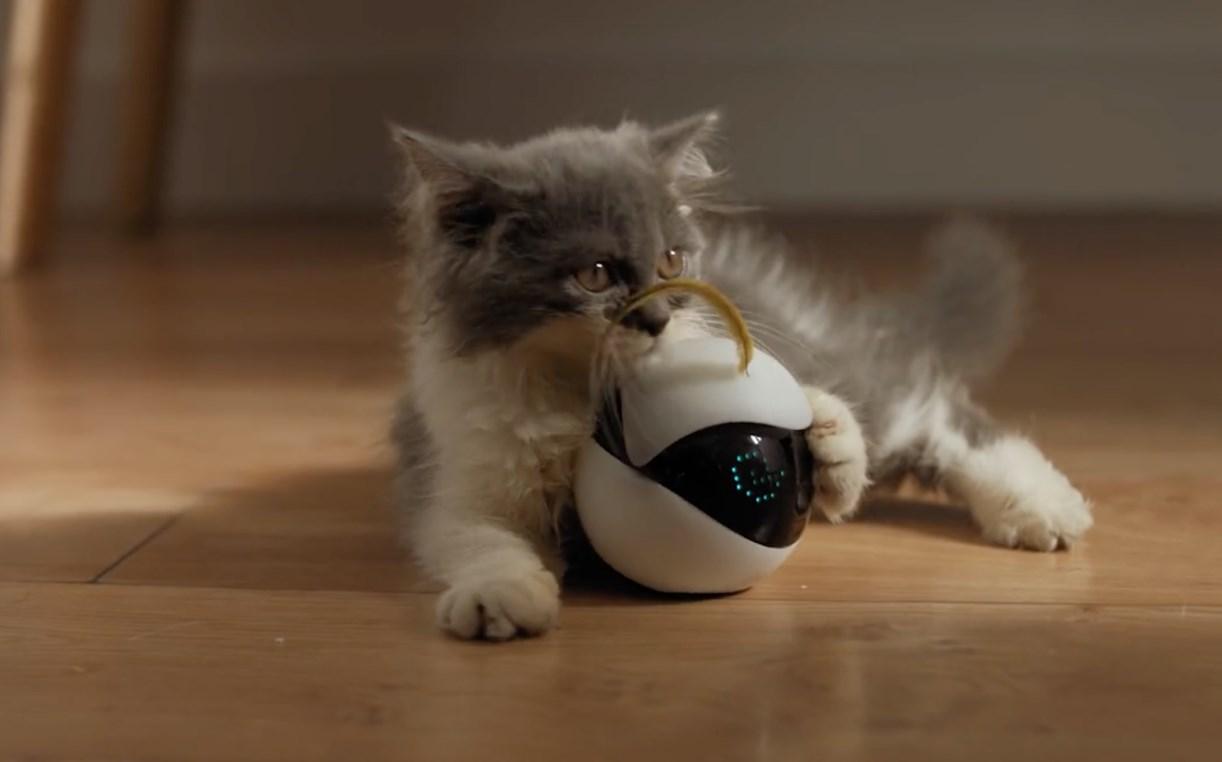 Создание котомашин: в сети собирают деньги на робота-компаньона для животных