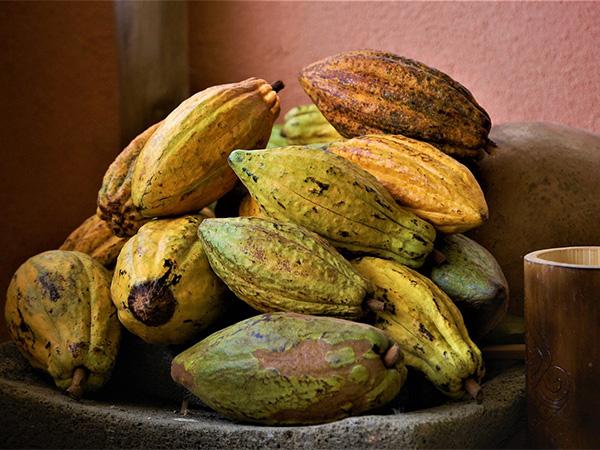 Какао-бобы, чуфа и брокколи помогут в профилактике рака