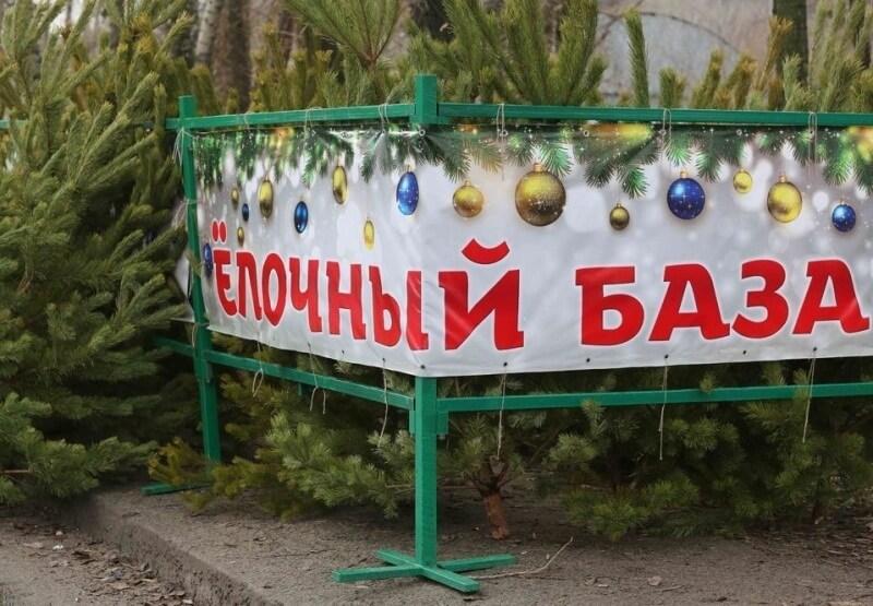 В Краснодаре живую новогоднюю елку можно купить за 500 рублей