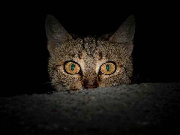 Что видят кошки в пустом углу, когда «видят призраков»