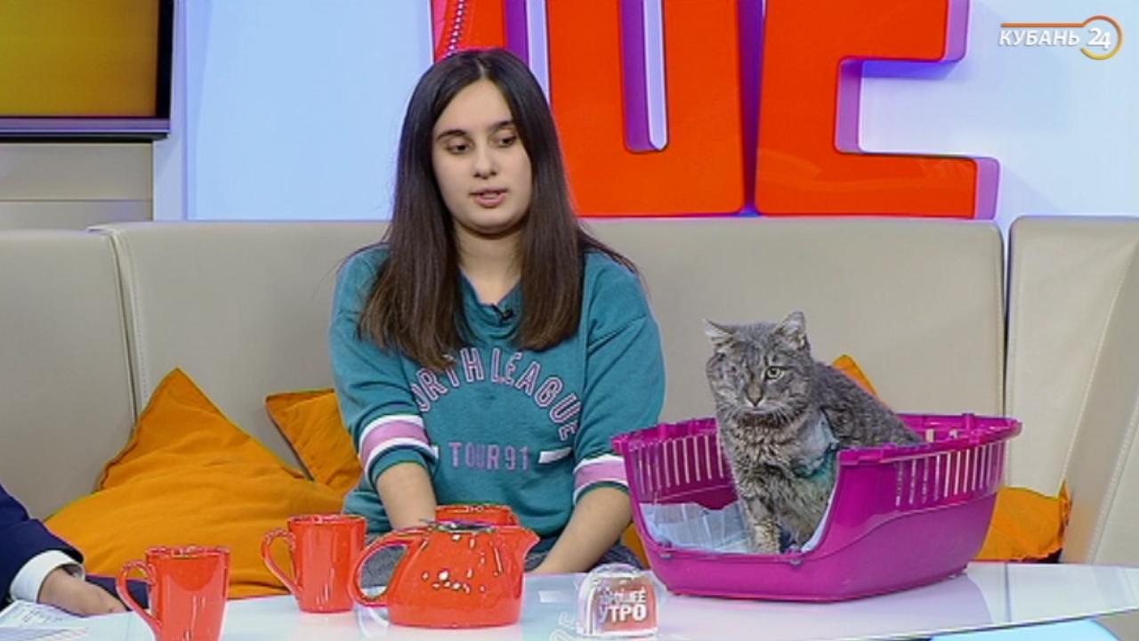 Волонтер Мария Сидоренко: некоторые люди просят у нас озорных котов