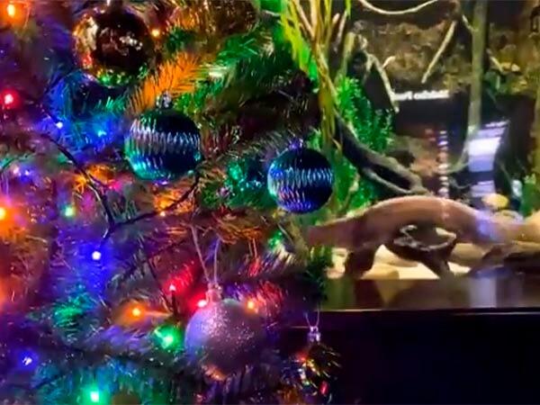 Ученым удалось подключить новогоднюю елку к электрическому угрю