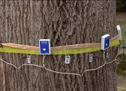 В Сочи вековые деревья обследуют акустическим томографом
