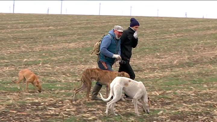 Житель Усть-Лабинского района разводит самых быстрых собак в мире
