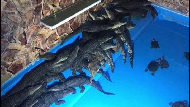 Краевая прокуратура начала проверку деятельности крокодиловой фермы в Краснодаре