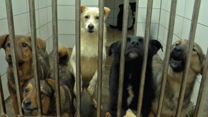 Краснодарский приют для животных «Краснодог» призвал жителей края забрать собак