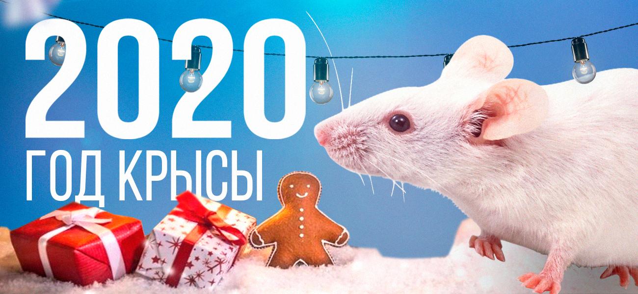 2020 год Крысы: история, культура и философия