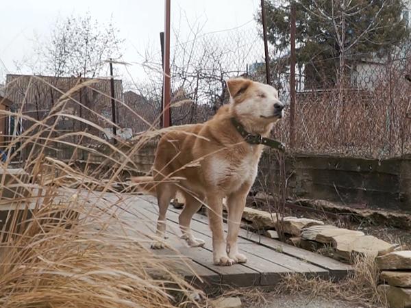 В Новороссийске семья приютила покалеченную людьми слепую собаку