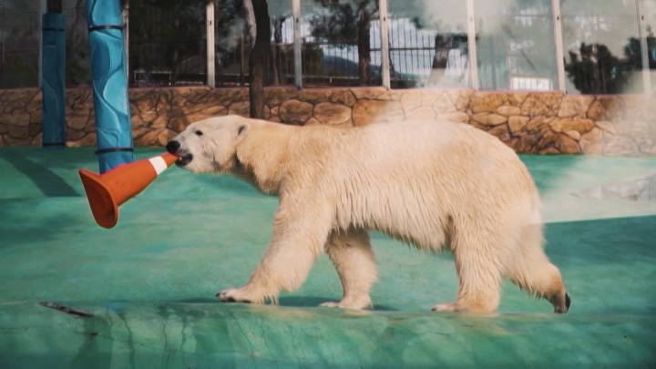 Зоопарк в Геленджике отметил Международный день полярного медведя
