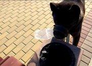В Сочи трех собак научили убирать мусор с пляжей