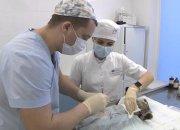 На Кубани 25 февраля можно будет стерилизовать домашних животных со скидкой