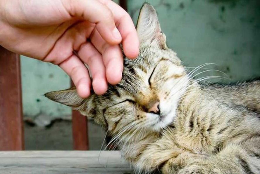 Сколько нужно гладить кота, чтобы успокоиться?