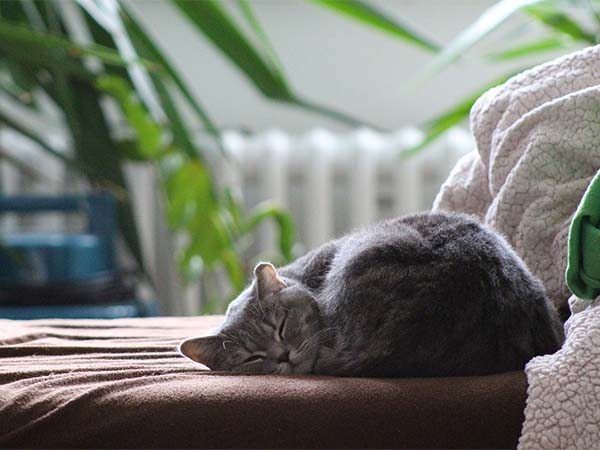 Создана музыка, снижающая стресс у кошек