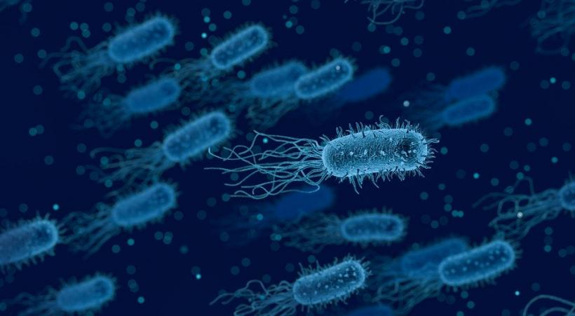 унитаз, туалет, бактерий, бактерии