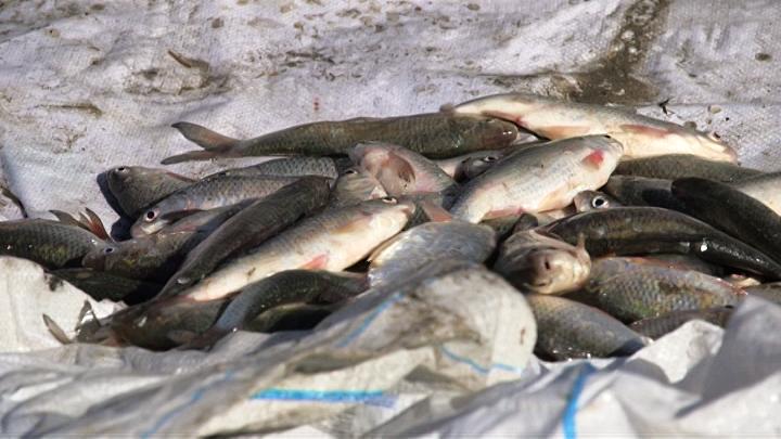 На Кубани провели рейд по браконьерам