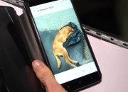 В Новороссийске неизвестные убили около 15 собак дротиками с ядом