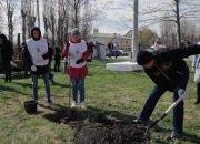 Жители Кубани присоединились к международной акции «Сад Памяти»