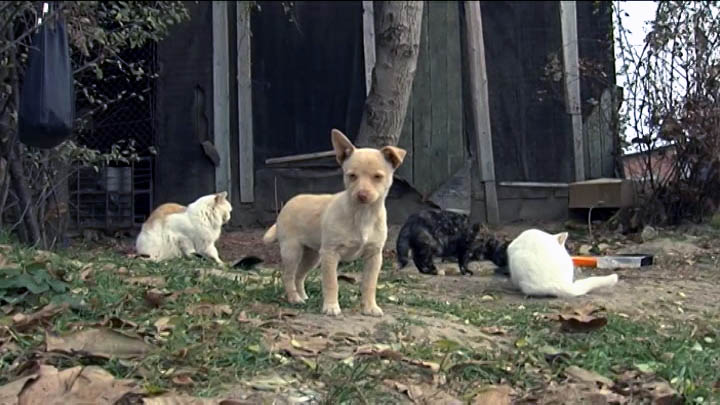 На Кубани участились случаи жестокого обращения с животными