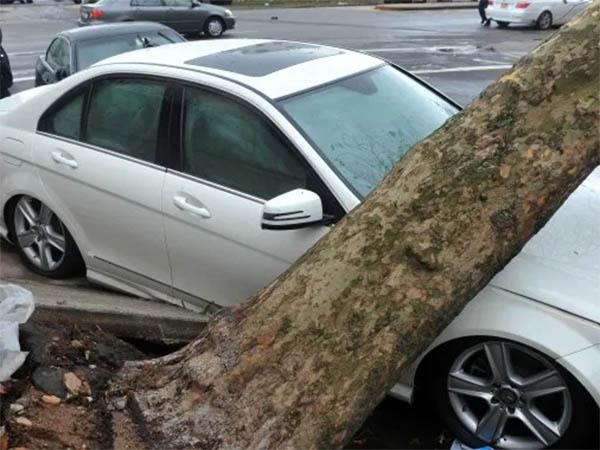 Как получить компенсацию, если на автомобиль упало дерево