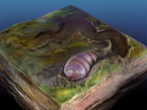 червь, ikaria wariootia, предок всех живых существ, ученые