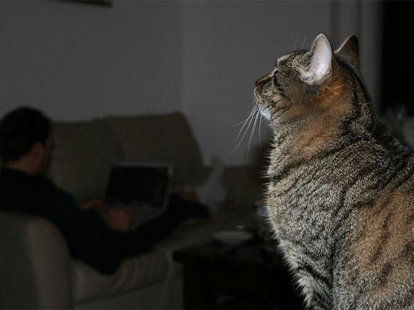 кошки, домашние животные, карантин, коронавирус